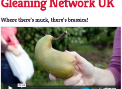 gleaning network